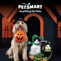 PetSmart - Wicked Fun! Flyer